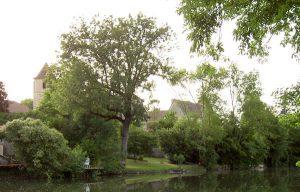 vue-riviere